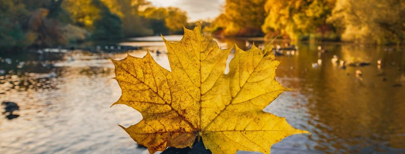 Autumn leaf at lake in Coombe Country Park